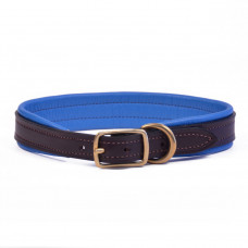Testing - Padded Dog Collar