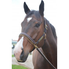 Halter with Nameplate
